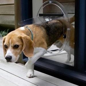 dog doors